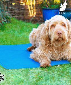 Kylande matta för djur Pet Prior (65 x 50 cm)